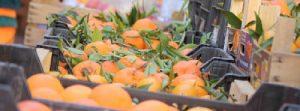 Catania, maxi sequestro di agrumi al Maas