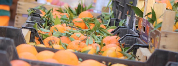 Fallisce il super furto di arance