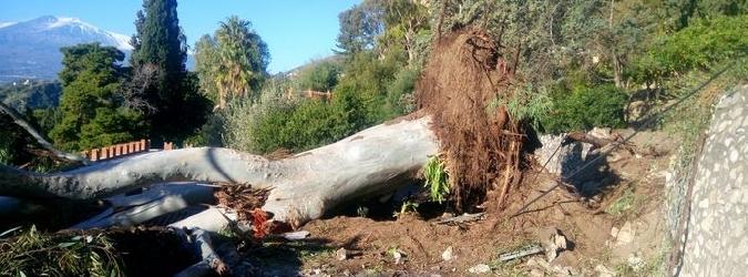 Taormina, albero sradicato dal vento