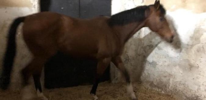 Corse di cavalli: denunciati 3 catanesi