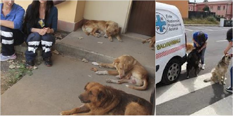 I cani del Cara di Mineo cercano casa