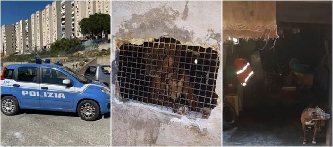 Blitz a Librino: al lavoro 10 ore per 10 euro, in un garage pitbull legato e senza cibo