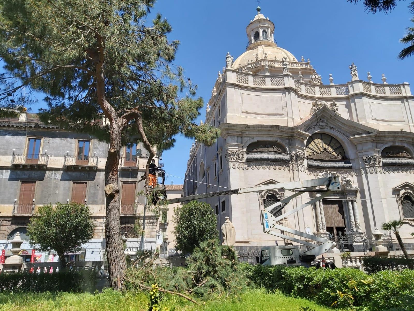 A Catania potatura con benedizione