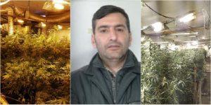 Piantagione di marijuana a San Cristoforo, sul mercato la droga valeva 750 mila euro