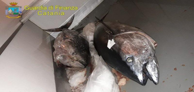 Tonno rosso sequestrato al Faro Biscari