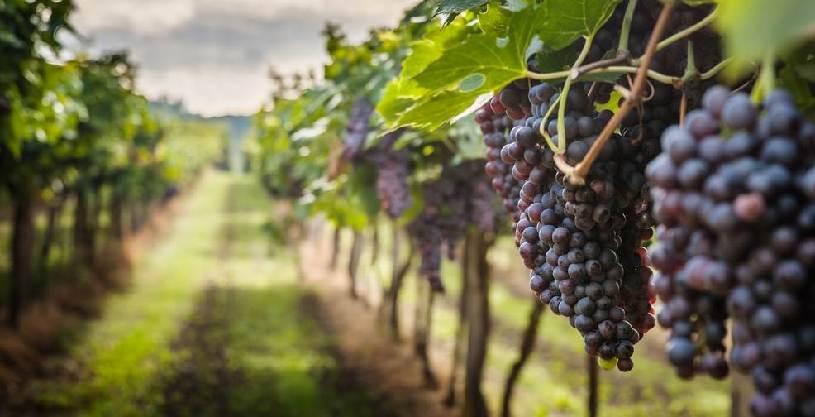 Venti di crisi sul mondo del vino