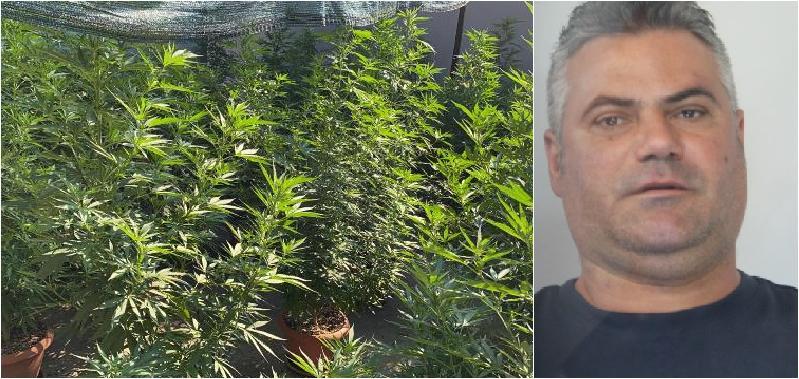 Coltivava marijuana a San Nullo: arrestato