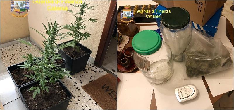 Coltivava marijuana in casa a Picanello