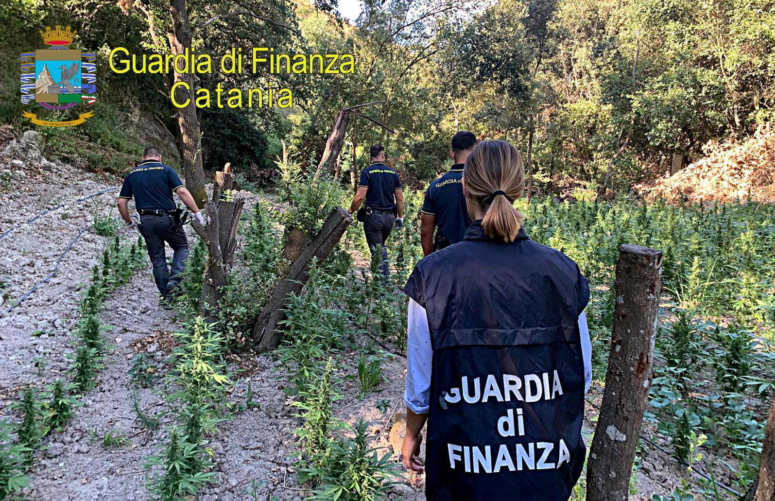 Marijuana nascosta nei boschi catanesi: avrebbe fruttato due milioni di euro