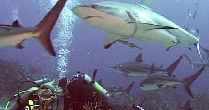 Sub circondato da squali nel Trapanese