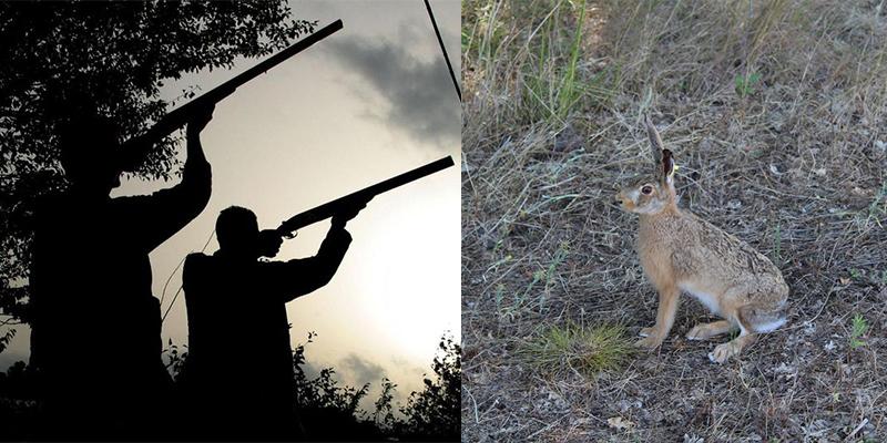 Spara a coniglio e ferisce un altro cacciatore