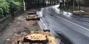 Distrutto il famoso viale dei pini