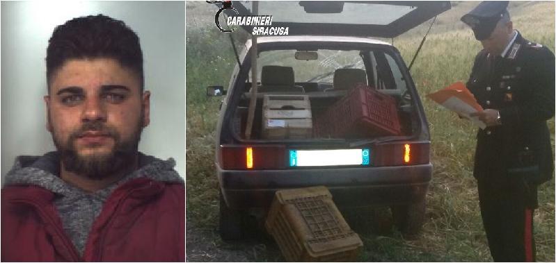 In auto 500 chili di uva, preso uno dei ladri