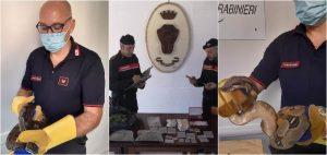 Droga, armi e serpenti in casa del cubano