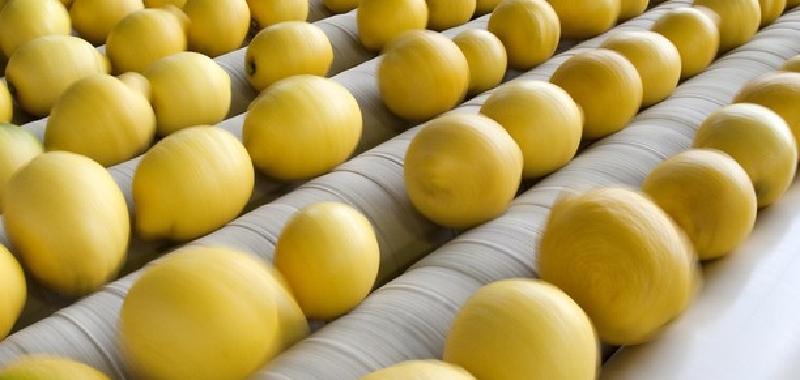 Il limone dell'Etna diventa Igp