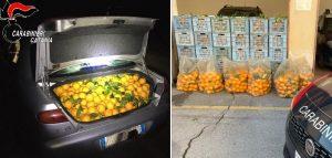 In auto una tonnellata di arance rubate